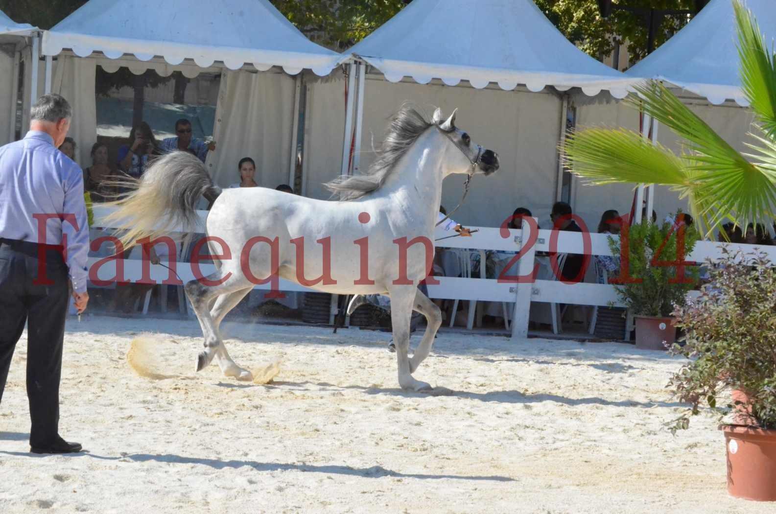 Concours National de Nîmes de chevaux ARABES 2014 - Championnat - SHAOLIN DE NEDJAIA - 12