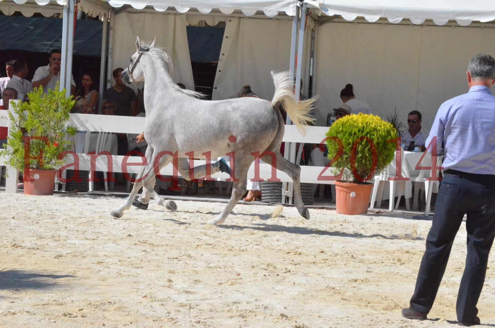 Concours national de Nîmes 2014 - Championnat Femelles Juniors - VOLODIA DE LAFON - 08
