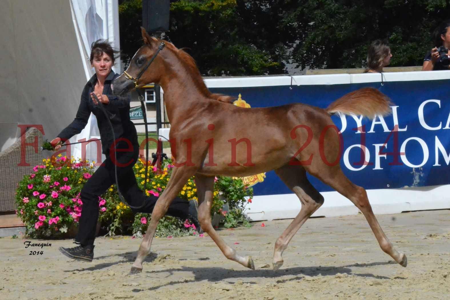 CHAMPIONNAT DE FRANCE 2014 A POMPADOUR - Notre Sélection - TSAR KENZA - 03