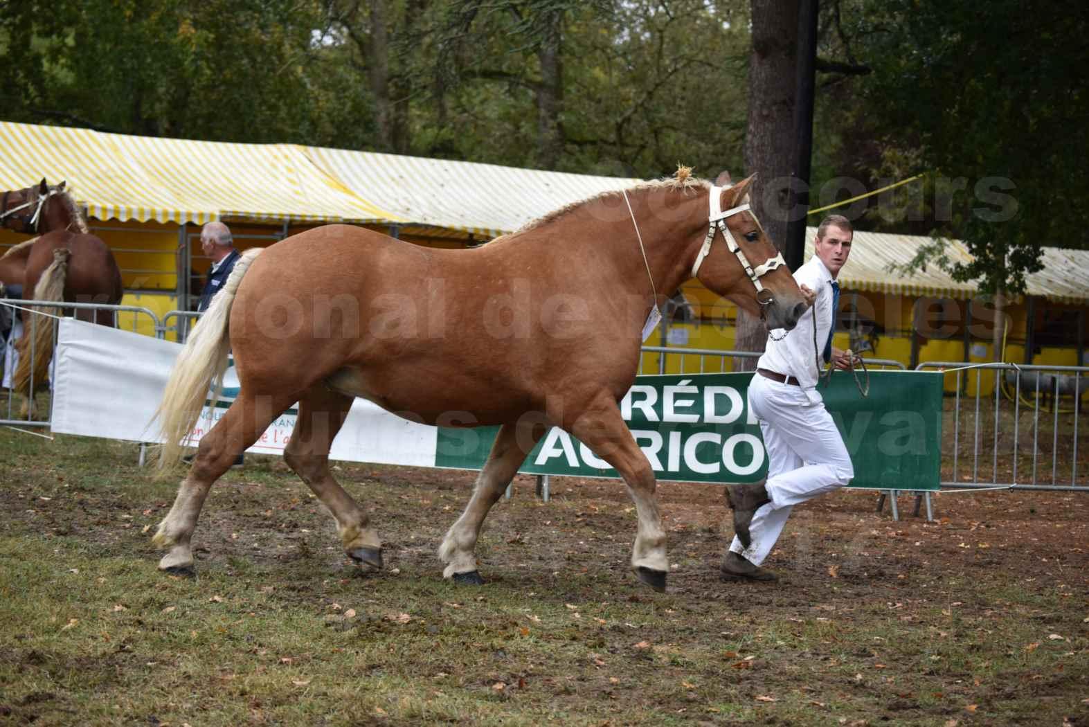 Concours Régional de chevaux de traits en 2017 - Pouliche Trait COMTOIS - EGLANTINE 28 - 05