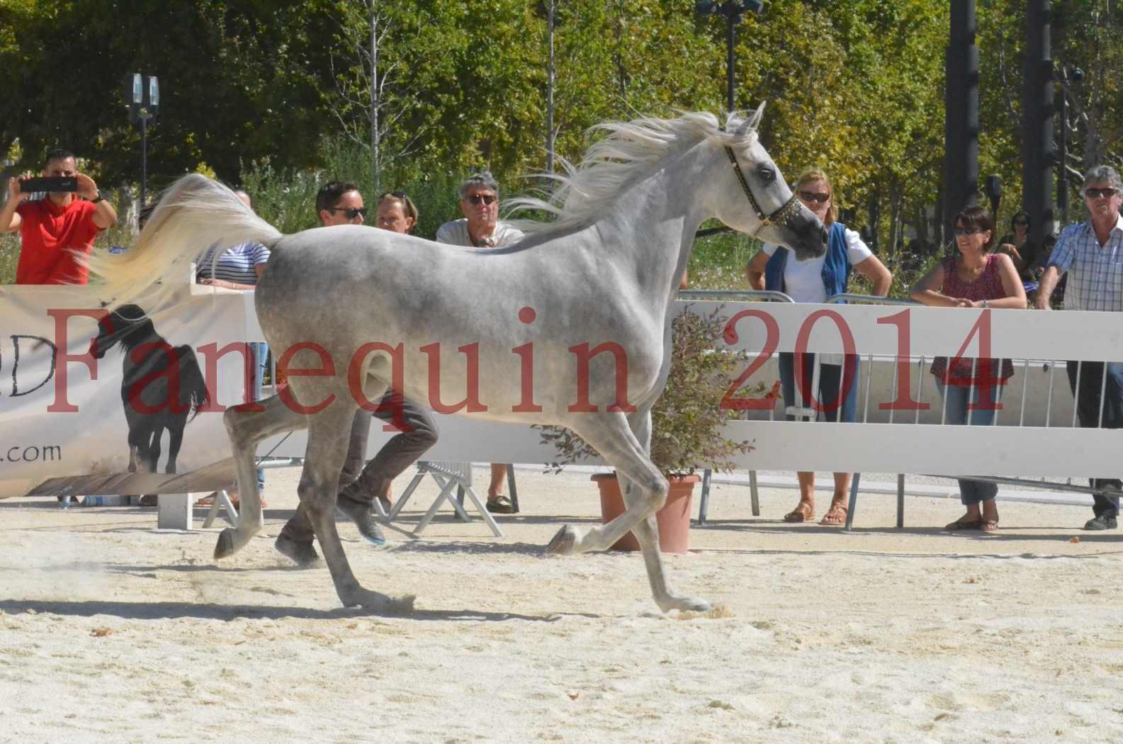 Concours national de Nîmes 2014 - Sélection  - VOLODIA DE LAFON - 13