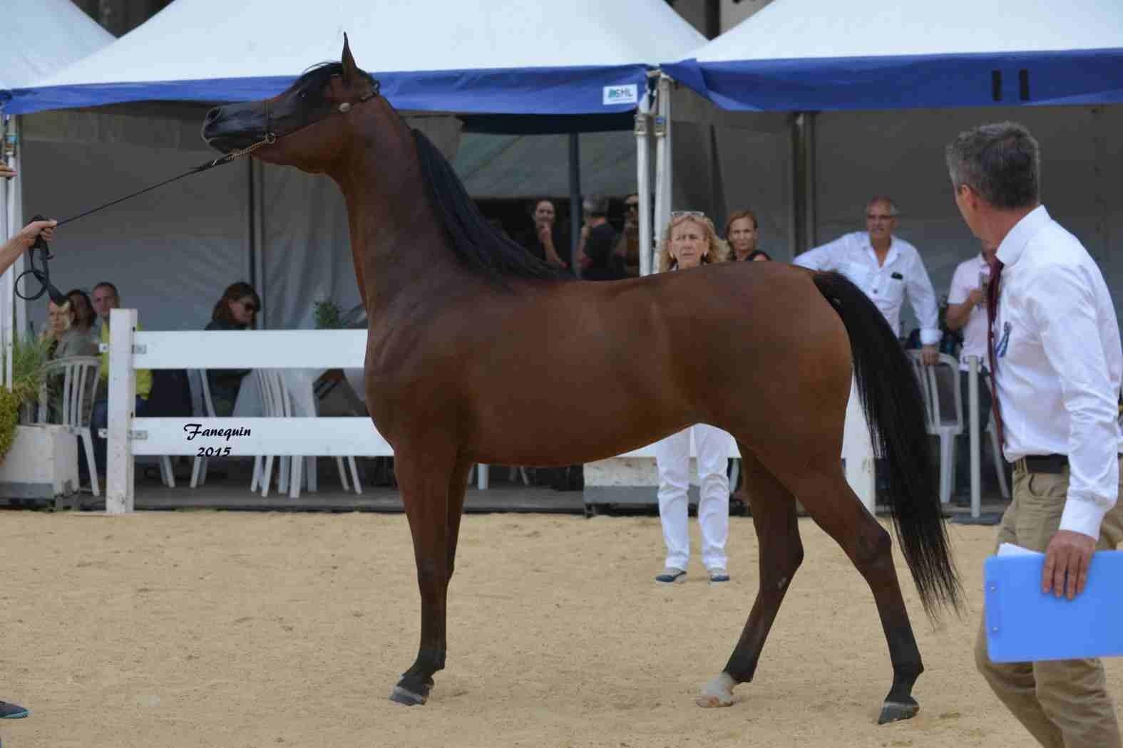 KARAWAN ALBIDAYER en 2015 - Concours national Nîmes prestige - notre sélection - 21