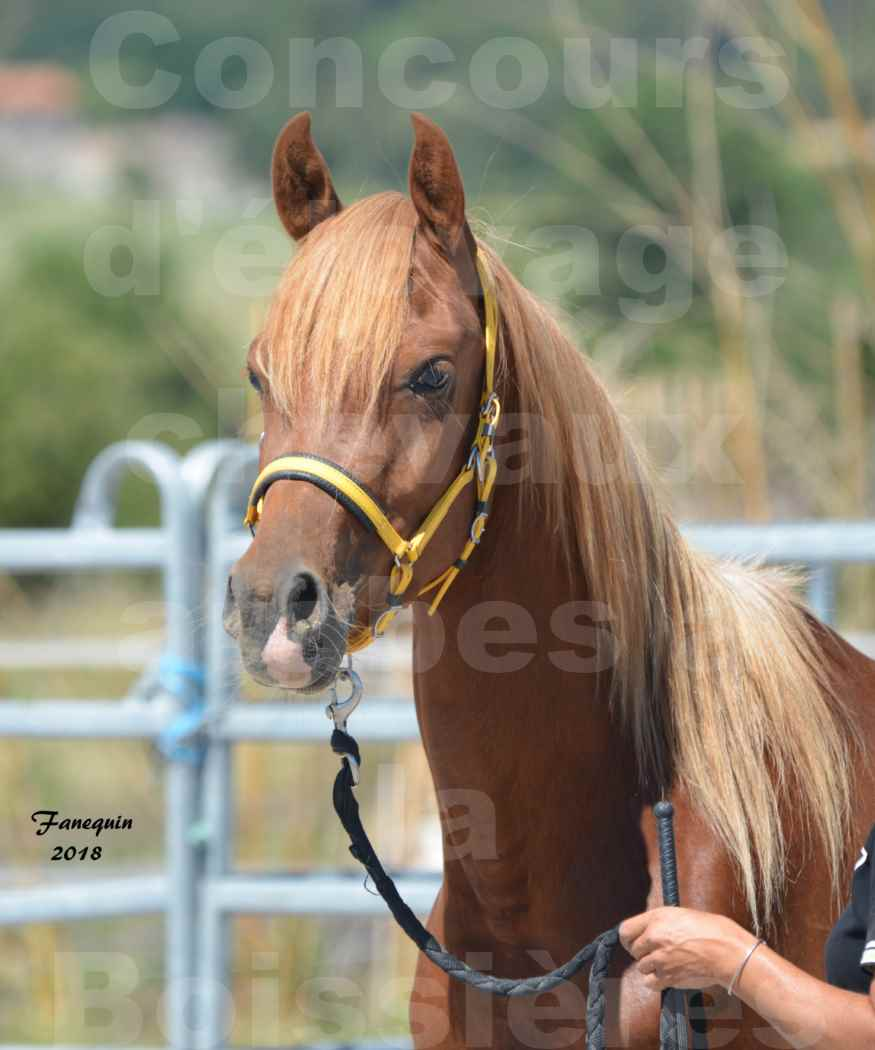 Concours d'Elevage de chevaux Arabes  le 27 juin 2018 à la BOISSIERE - FANGIO DES DOLINES - 1