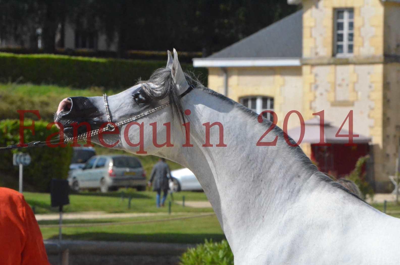 CHAMPIONNAT DE FRANCE  2014 A POMPADOUR - Sélection - SHAOLIN DE NEDJAIA - 60