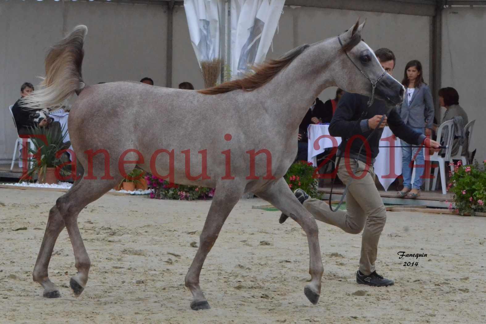 CHAMPIONNAT DE FRANCE 2014 A POMPADOUR - Notre Sélection - ANWAR ISHANE - 1