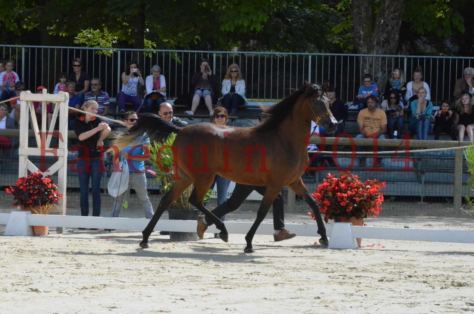 Championnat de FRANCE 2014 - Amateurs - KAL'ELLE D'ELHORIA - 38