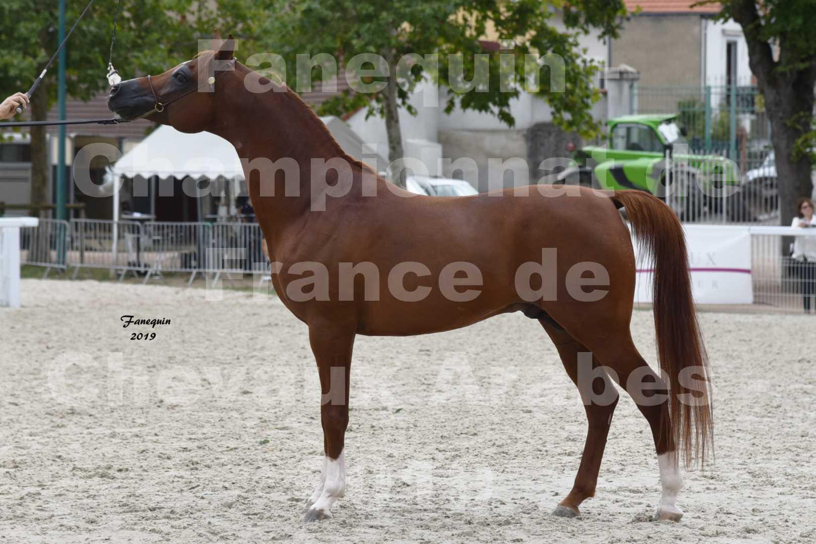 Championnat de France des chevaux Arabes en 2019 à VICHY - DZHARI NUNKI - 5