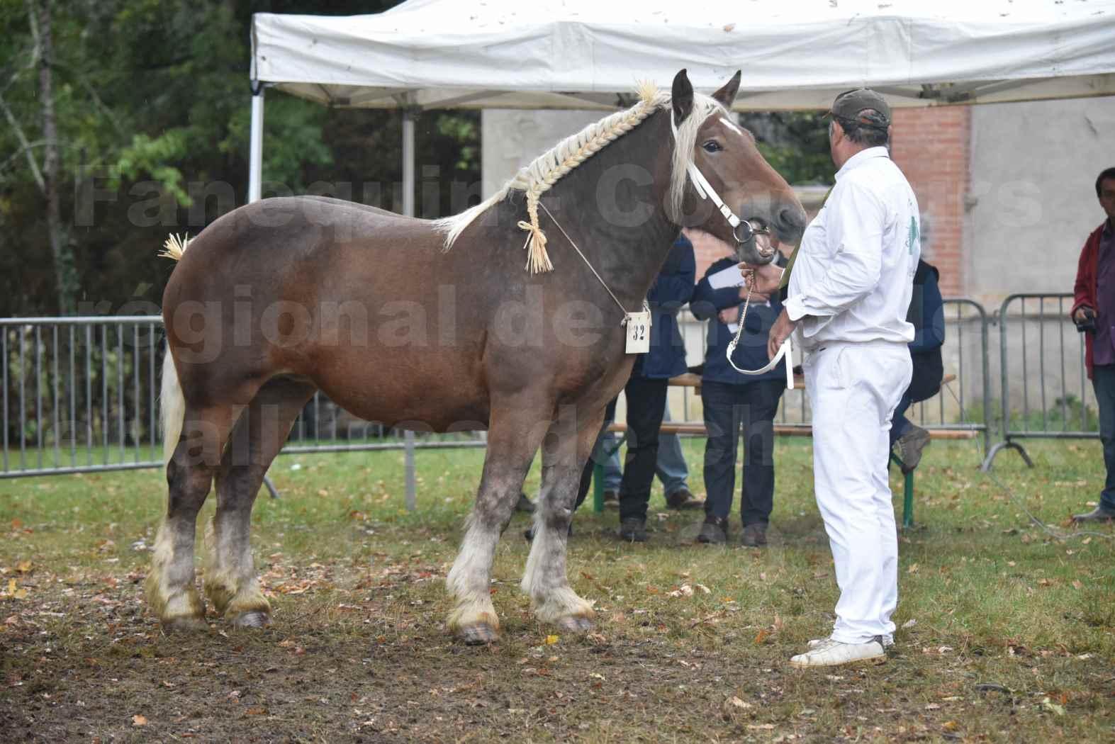 Concours Régional de chevaux de traits en 2017 - Pouliche Trait COMTOIS - ECLIPCE DE PIGASSOU - 08