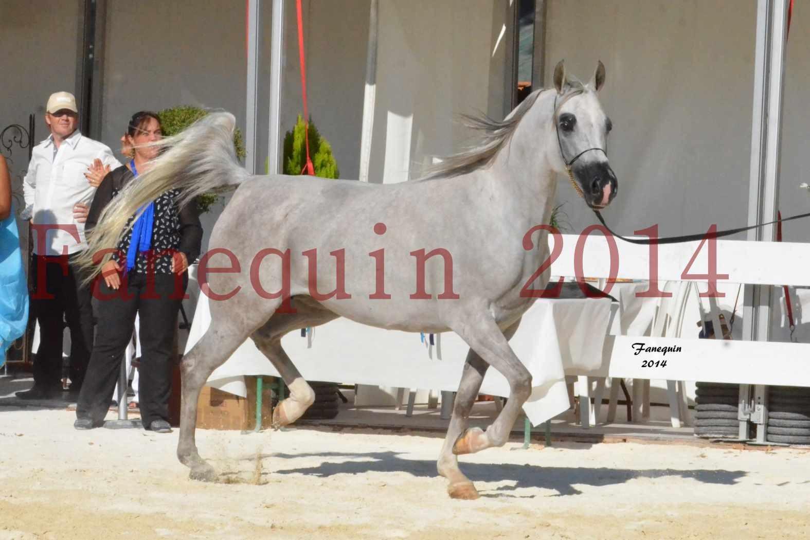 Concours National de Nîmes de chevaux ARABES 2014 - Notre Sélection - ELLESTERA - 09