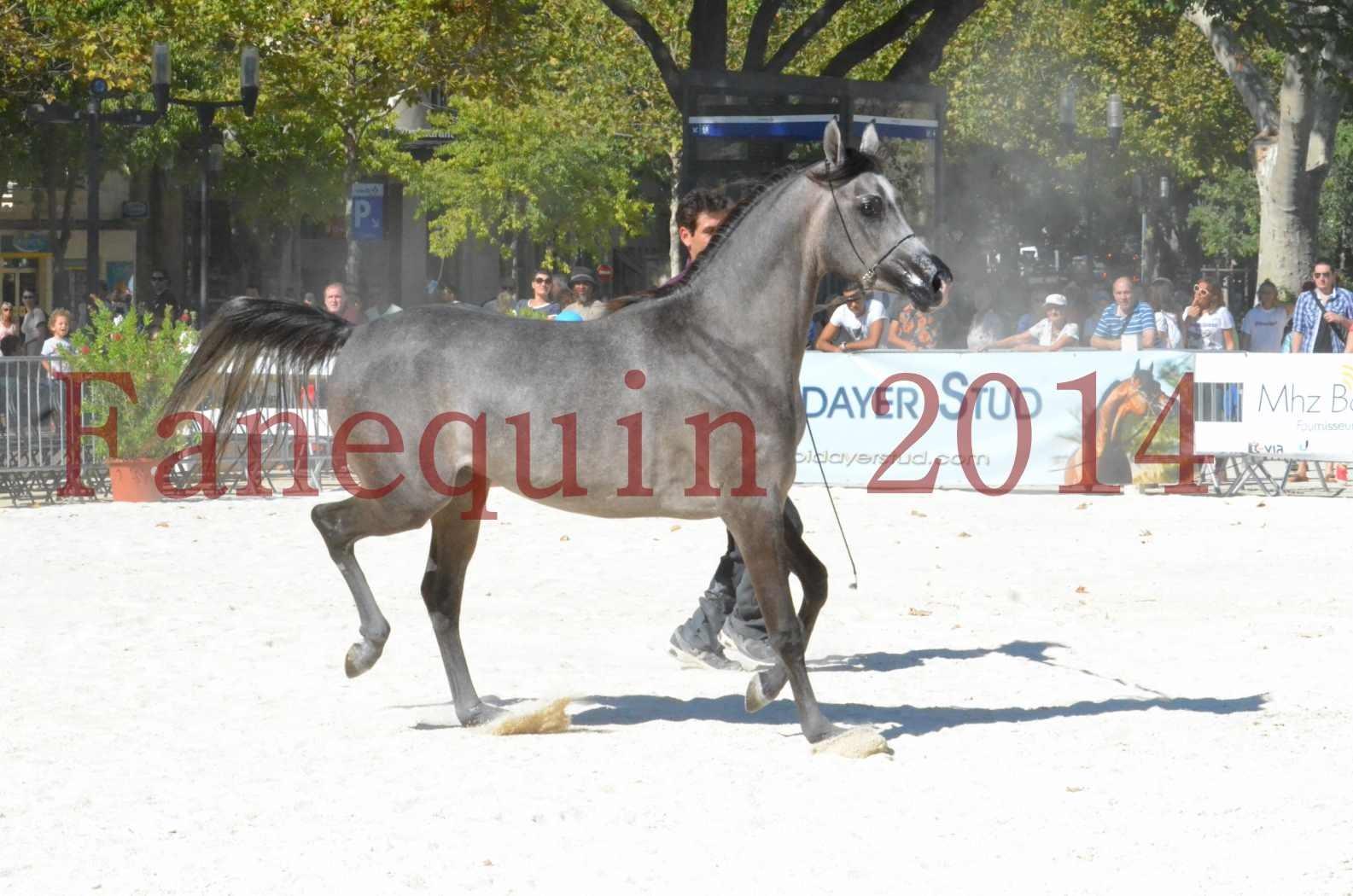Concours National de Nîmes de chevaux ARABES 2014 - Championnat - JOSEPH'S BOUZIOLS - S 10