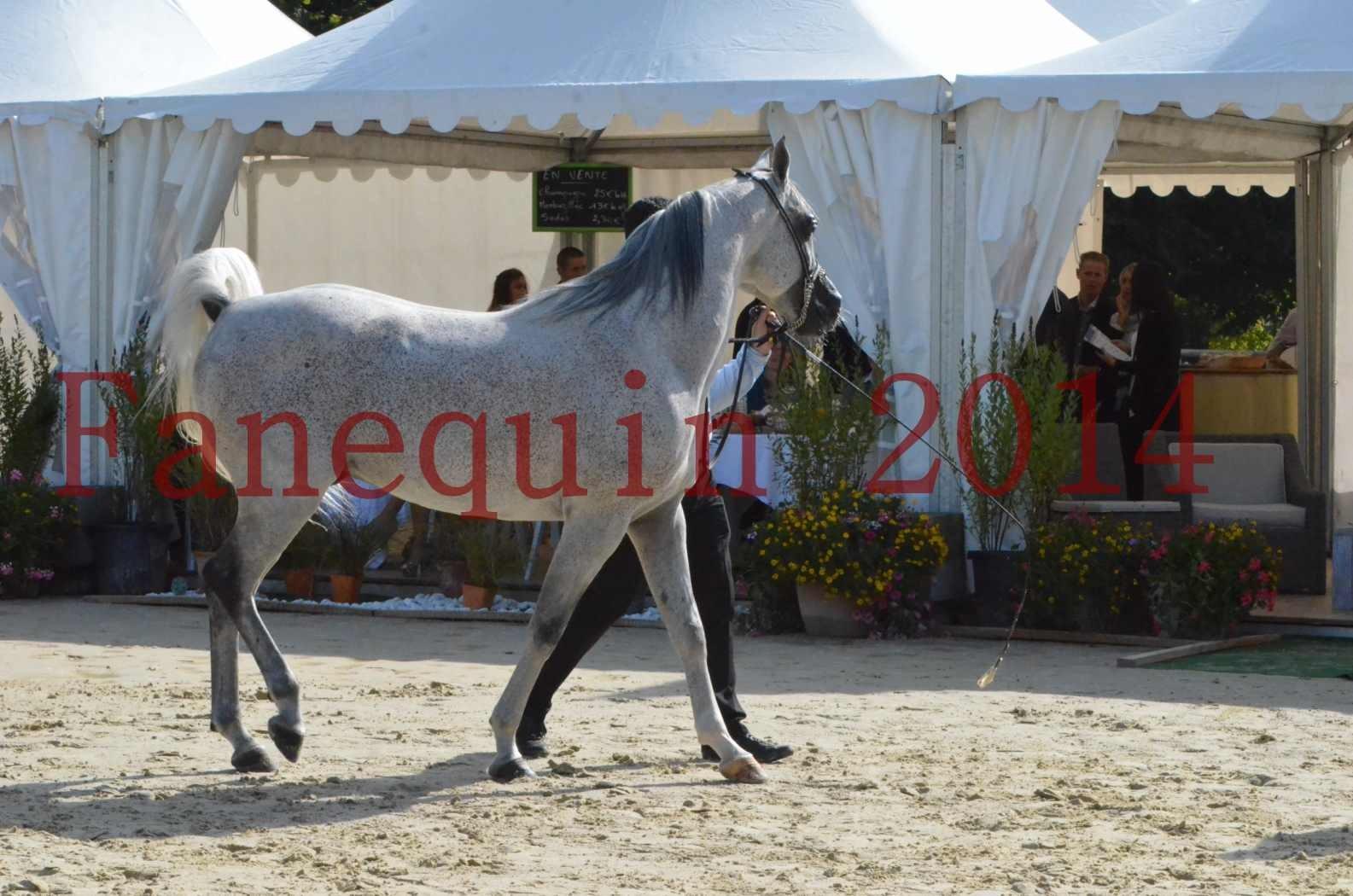 CHAMPIONNAT DE FRANCE  2014 A POMPADOUR - Sélection - SHEYK DE GARGASSAN - 03