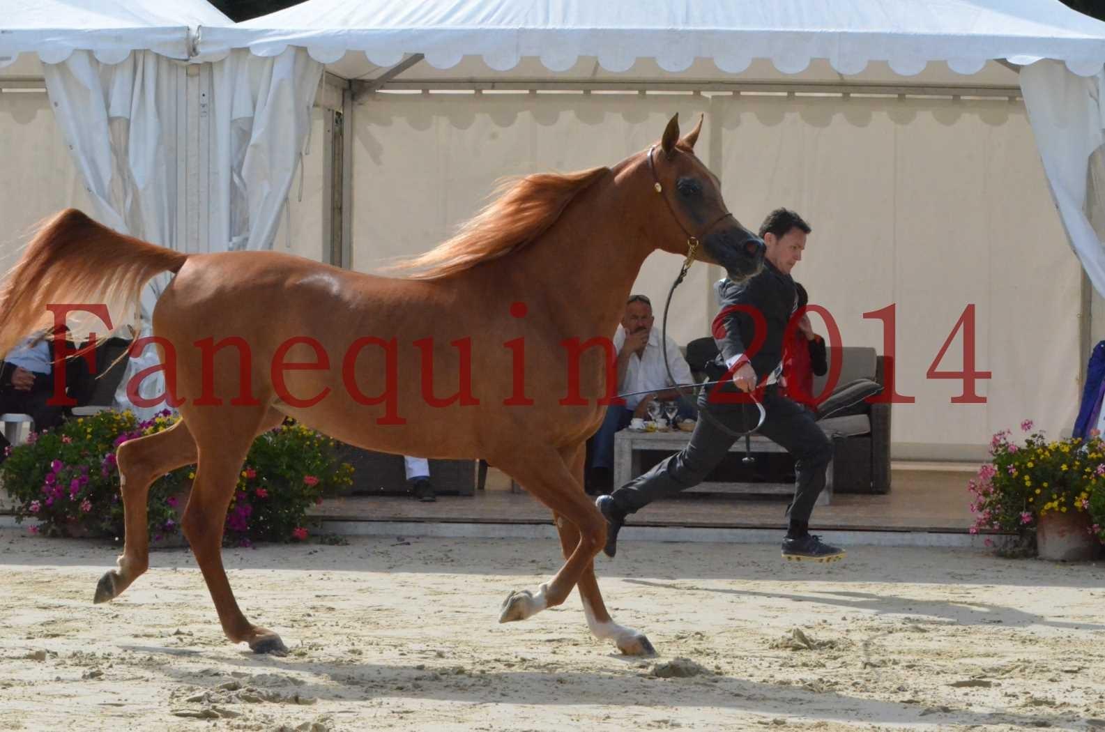 CHAMPIONNAT DE FRANCE 2014 A POMPADOUR - Sélection - LUTFINAH JA - 31
