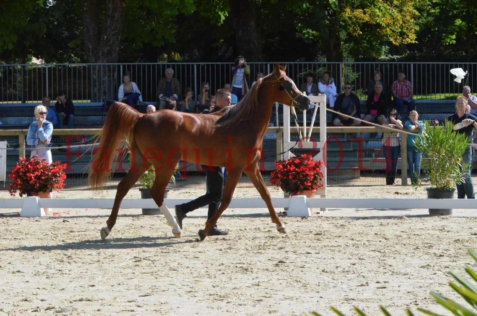 Championnat de FRANCE 2014 - Amateurs - SELECTO IBN SAMAWI - 002
