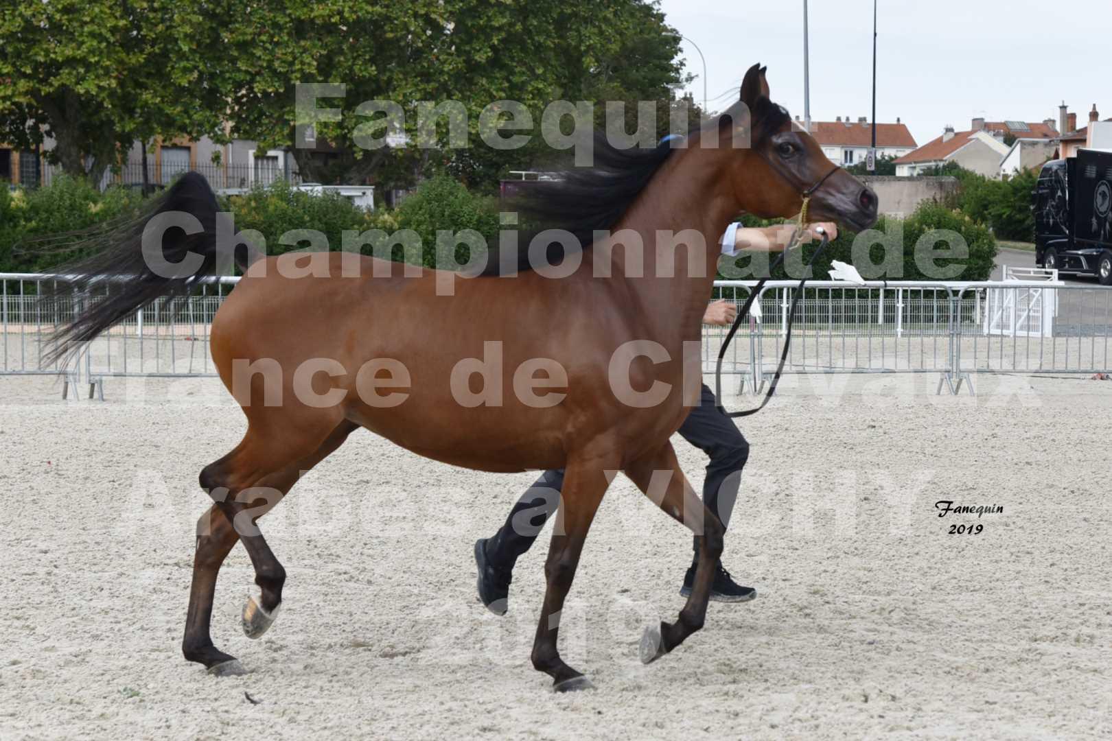 Championnat de France des chevaux Arabes en 2019 à VICHY - MADONNA J - 2