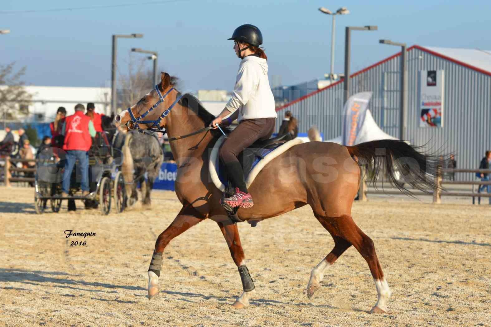 Cheval Passion 2016 - Présentation extérieure de chevaux Arabes montés - 12