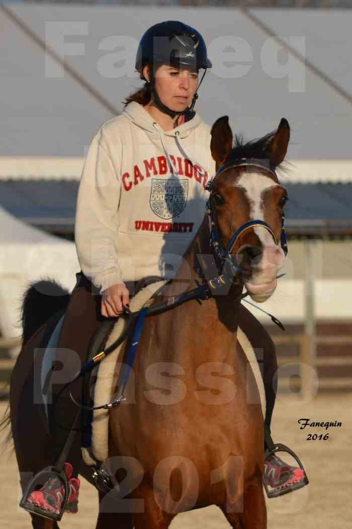 Cheval Passion 2016 - Présentation extérieure de chevaux Arabes montés - 01
