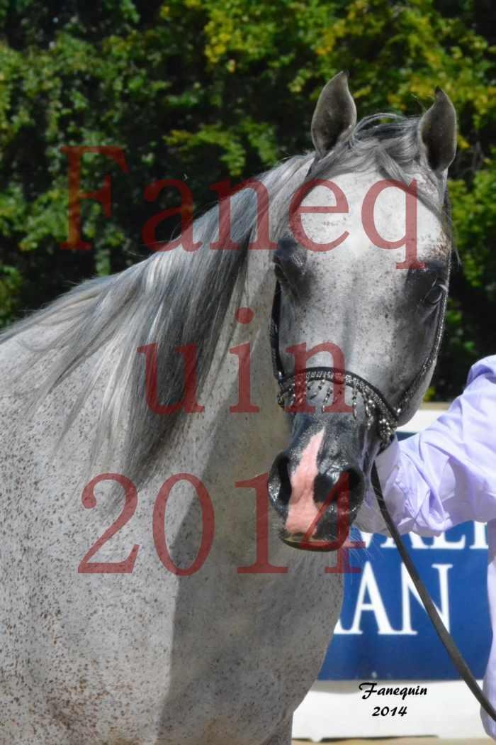 CHAMPIONNAT DE FRANCE  2014 A POMPADOUR - Notre Sélection - Portraits - SHEYK DE GARGASSAN - 4