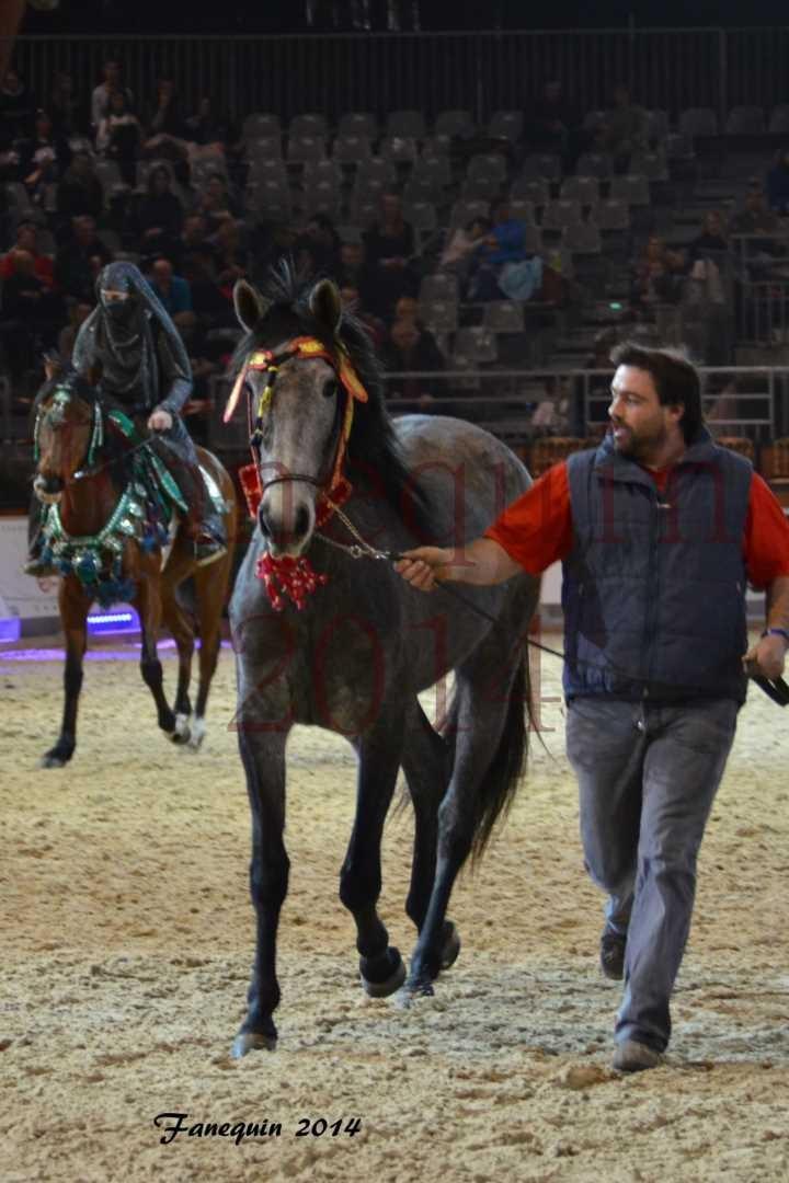 Show des races - Chevaux BARBE 14