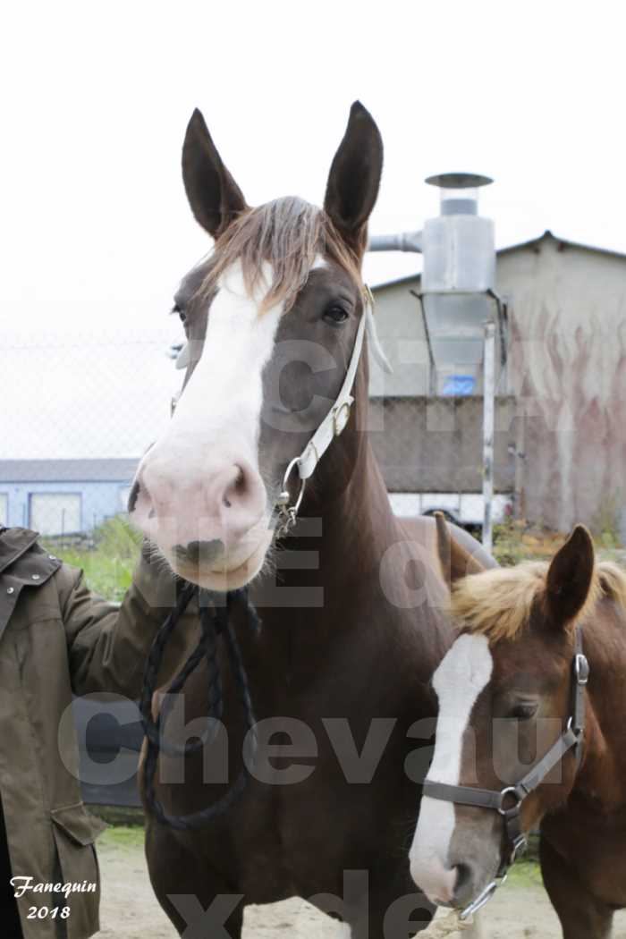 """Concours Régional """"OCCITANIE"""" Modèles et Allures de chevaux de trait à REQUISTA en 2018 - PORTRAITS - 21"""