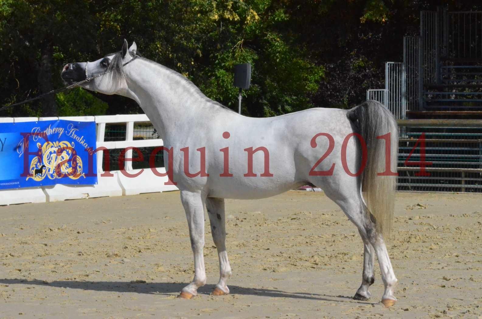 CHAMPIONNAT DE FRANCE  2014 A POMPADOUR - Sélection - SHAOLIN DE NEDJAIA - 35