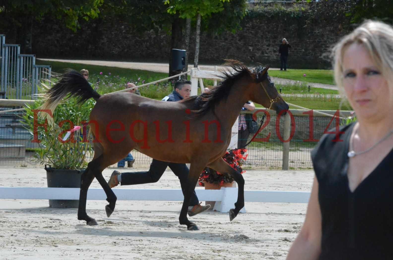 Championnat de FRANCE 2014 - Amateurs - KAL'ELLE D'ELHORIA - 49