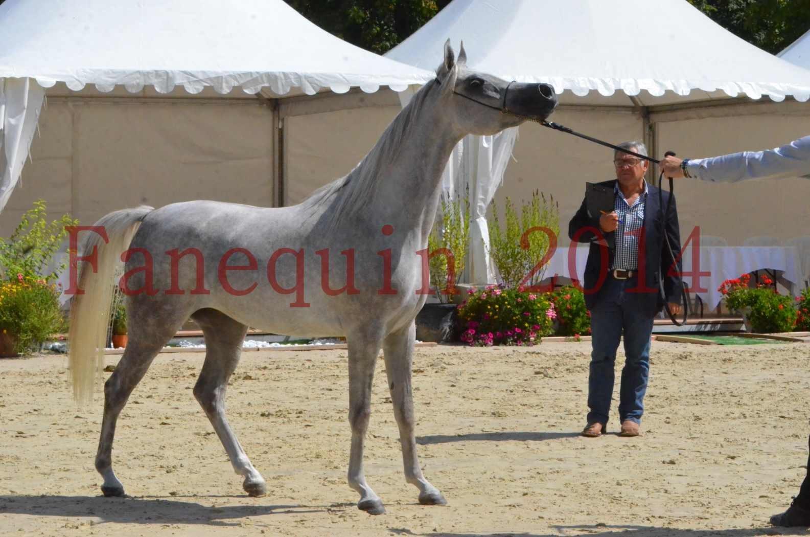 Championnat de FRANCE 2014 - Amateurs - VOLODIA DE LAFON - 069