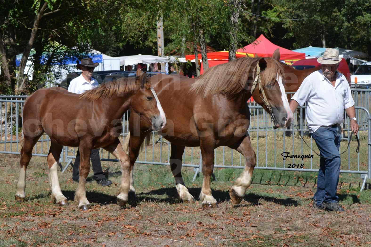 Fête du cheval à GRAULHET le 16 septembre 2018 - Concours Départemental de chevaux de traits - 22