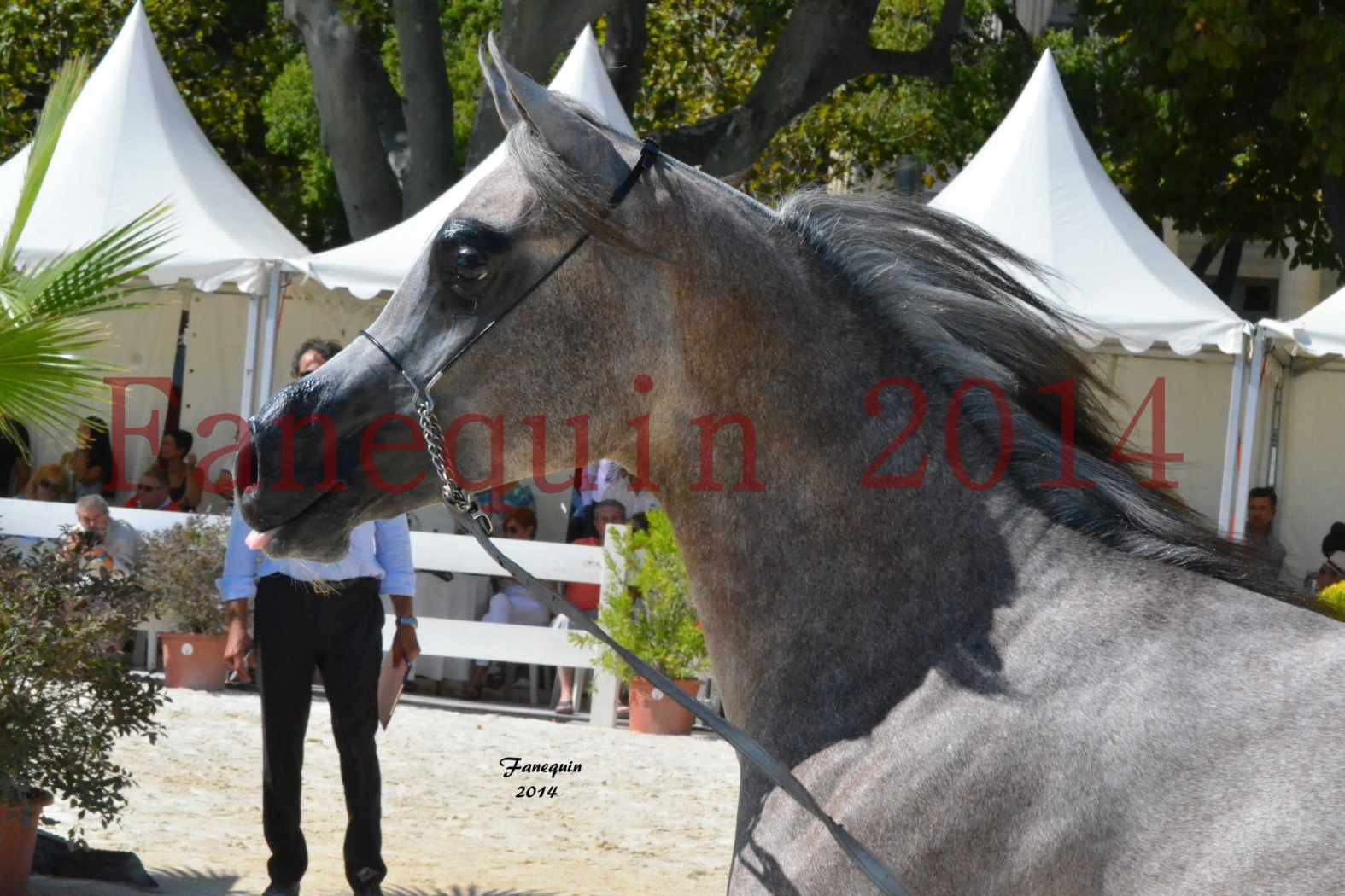 Championnat Juniors Femelles - Médaille de BRONZE - LABEEBAH ALBIDAYER - 04