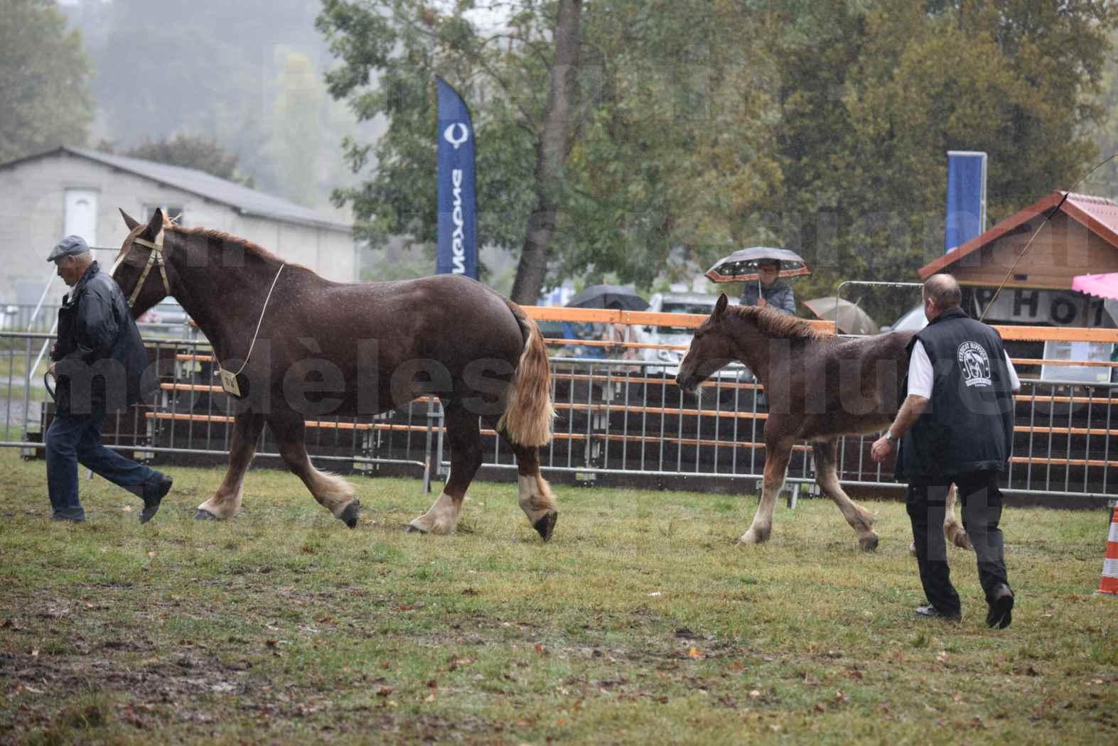 Concours Régional de chevaux de traits en 2017 - Trait BRETON - Jument suitée - SISIE DE LA GLEVADE - 06