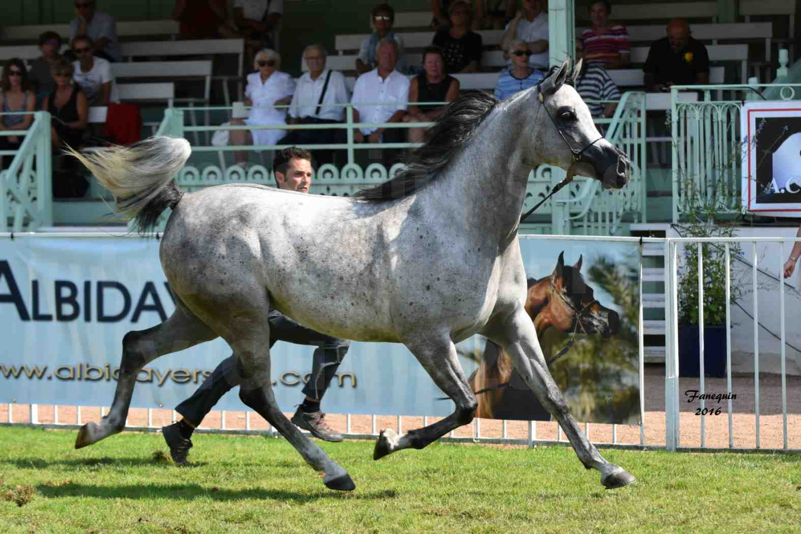 International Arabian Horse Show B de VICHY 2016 - ISABELLA