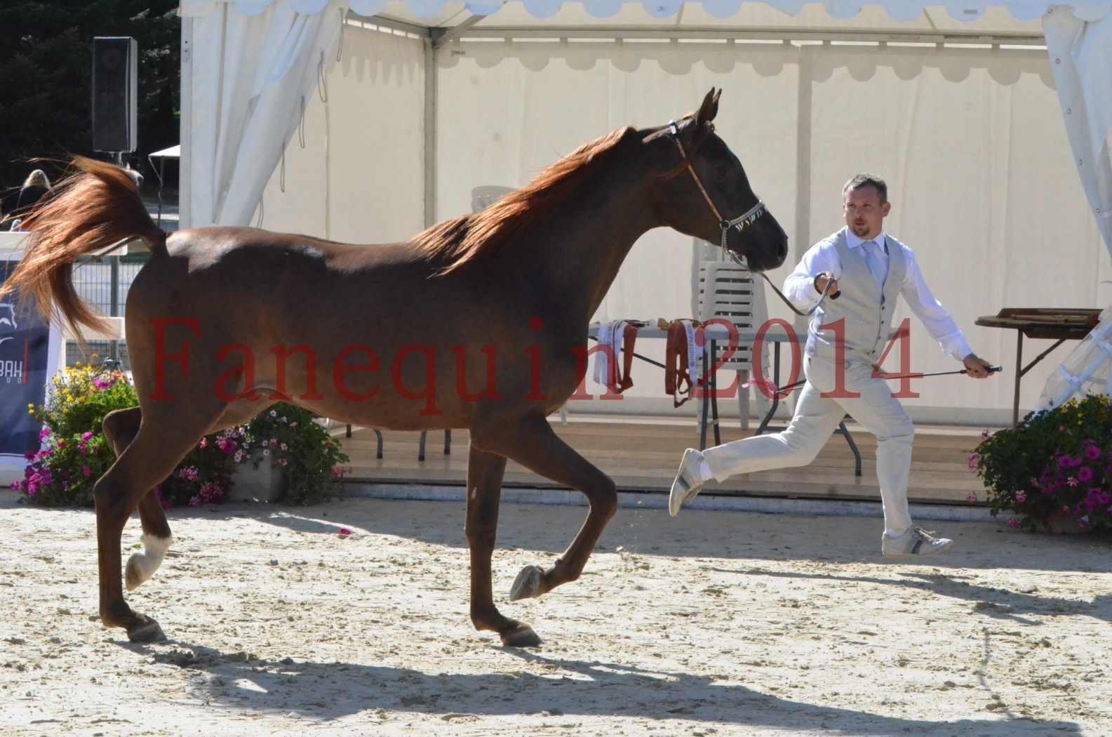 Championnat de FRANCE 2014 - Amateurs - LAMAL - 14