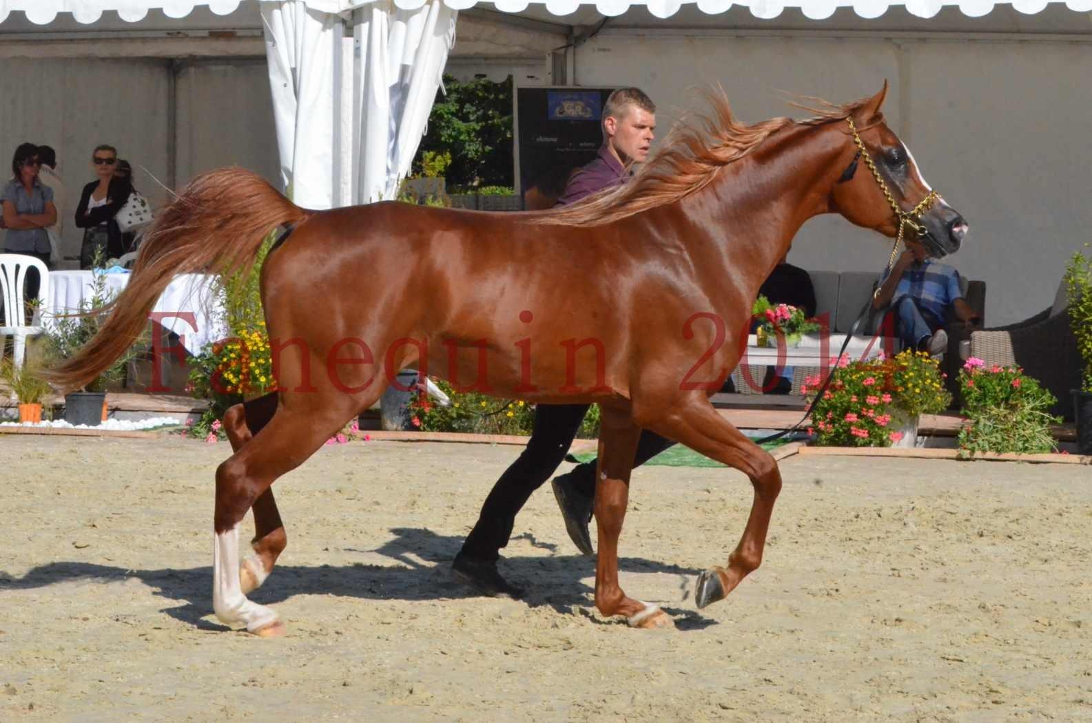 Championnat de FRANCE 2014 - Amateurs - SELECTO IBN SAMAWI - 041