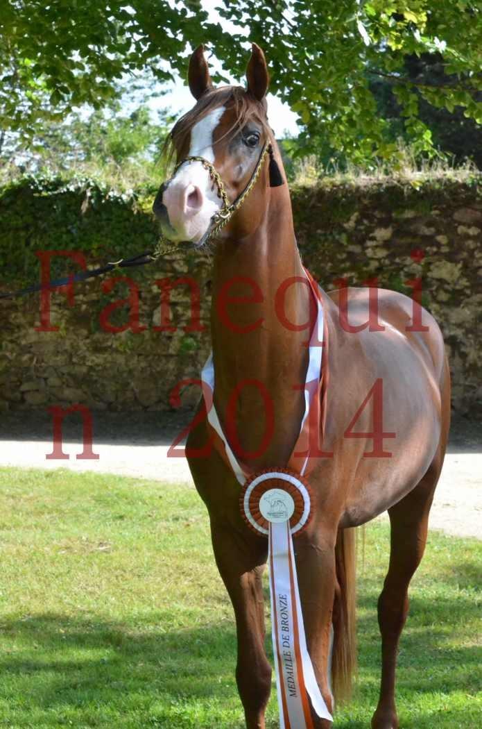 Championnat de FRANCE 2014 - Amateurs - SELECTO IBN SAMAWI - 175