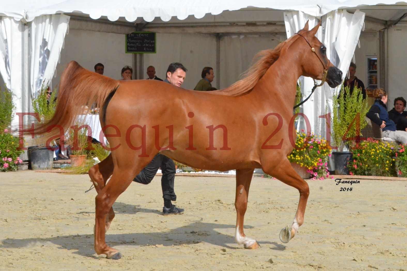 CHAMPIONNAT DE FRANCE 2014 A POMPADOUR - Notre Sélection - LUTFINAH JA - 21