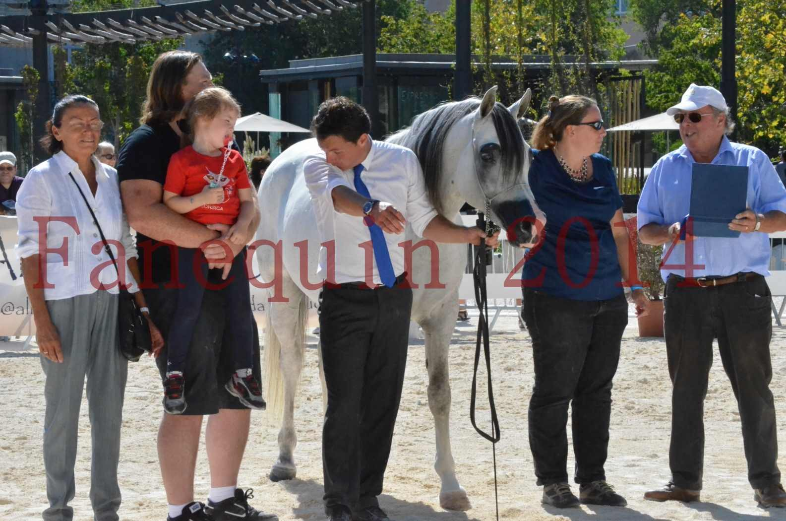 Concours National de Nîmes de chevaux ARABES 2014 - Sélection - SHAOLIN DE NEDJAIA - 93
