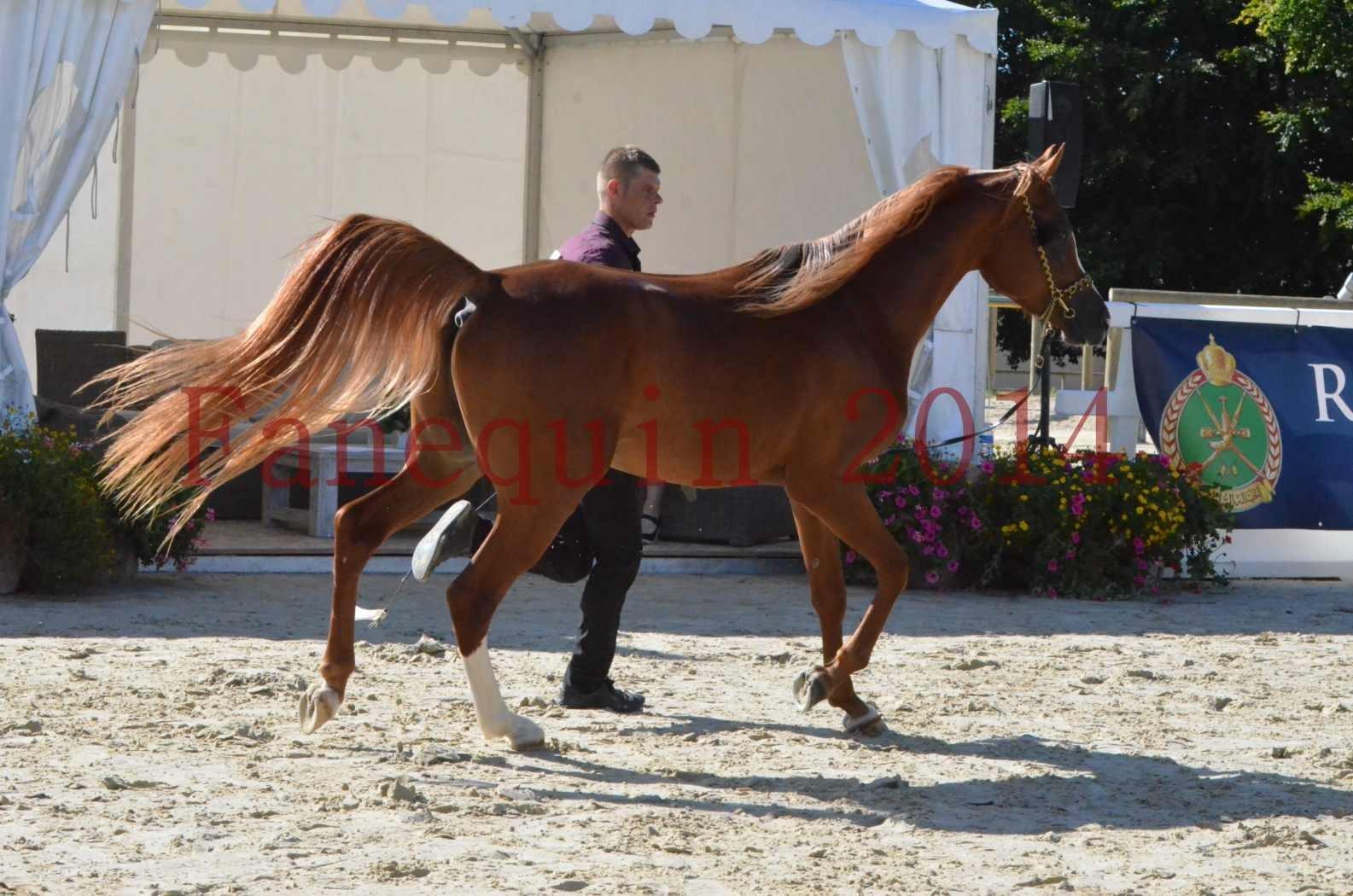 Championnat de FRANCE 2014 - Amateurs - SELECTO IBN SAMAWI - 031