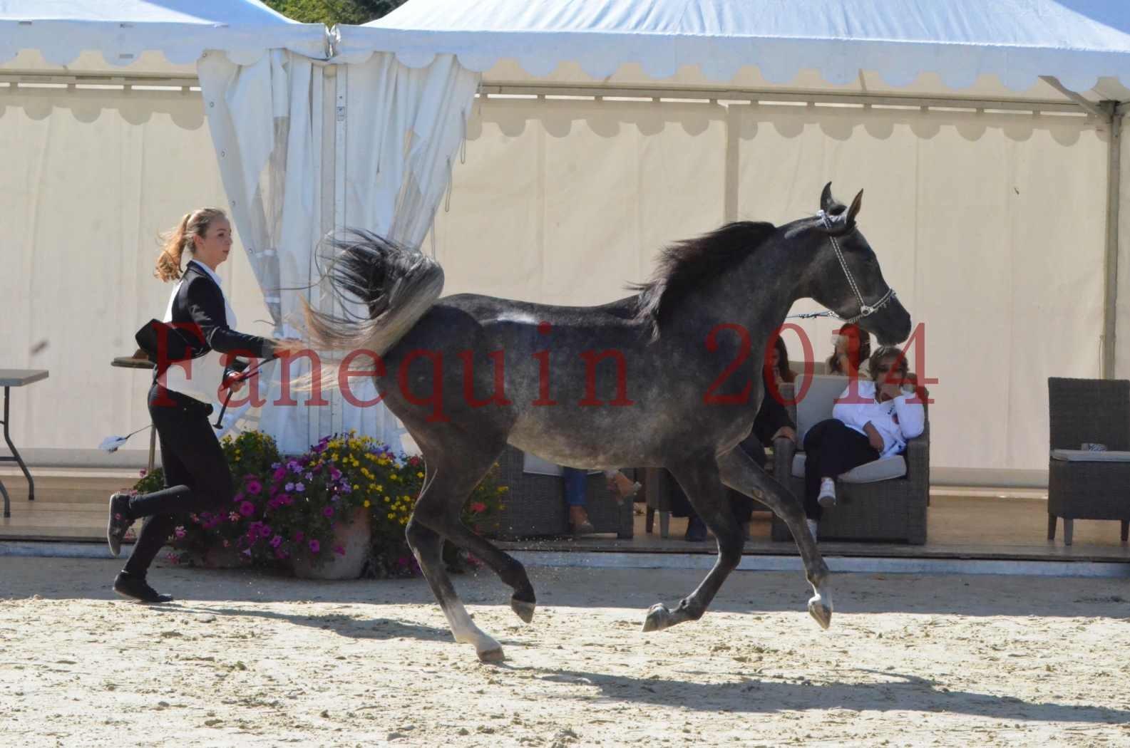 Championnat de FRANCE 2014 - Amateurs - CHTI KAID D'AUBIN - 21
