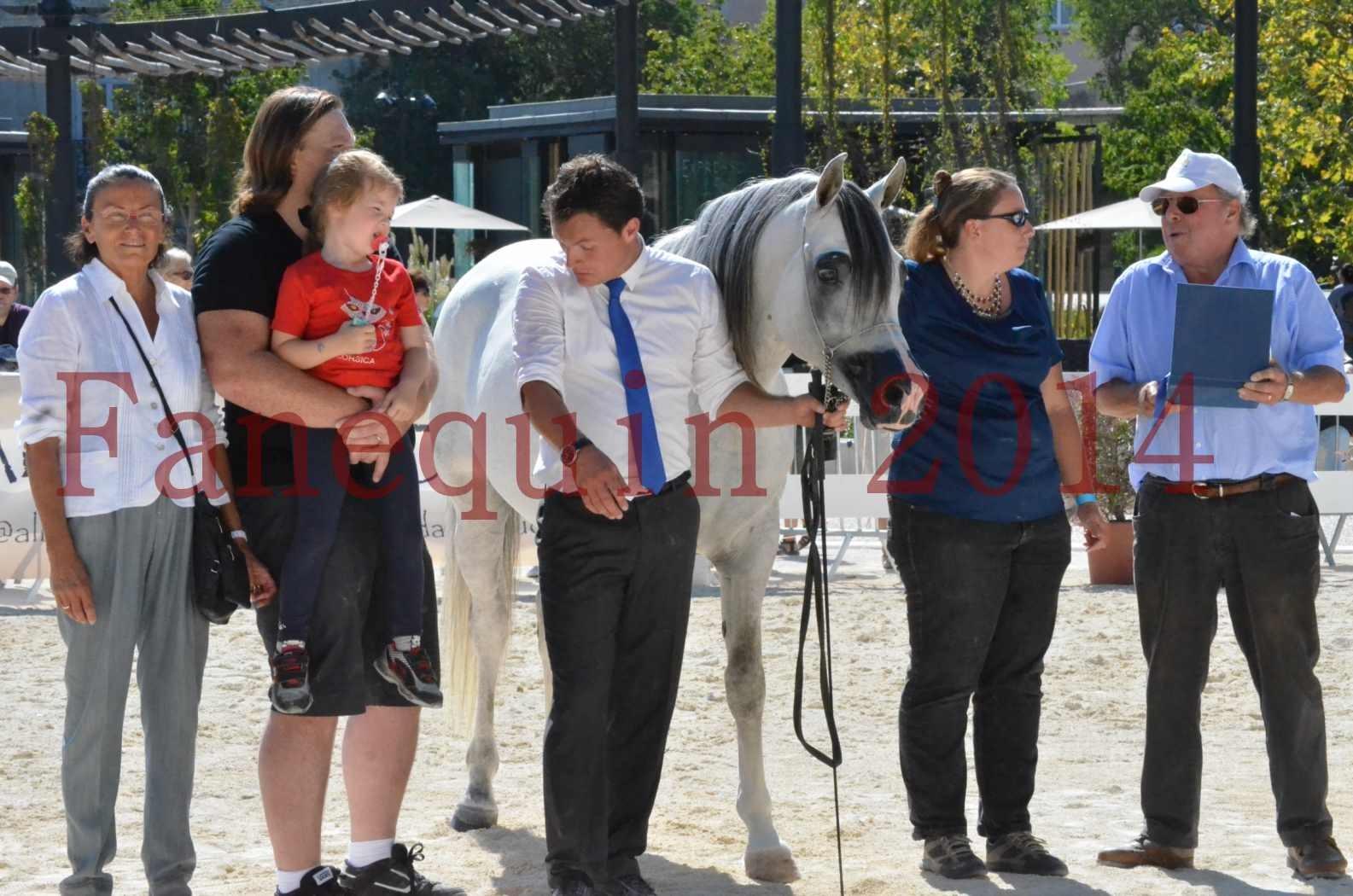 Concours National de Nîmes de chevaux ARABES 2014 - Sélection - SHAOLIN DE NEDJAIA - 92