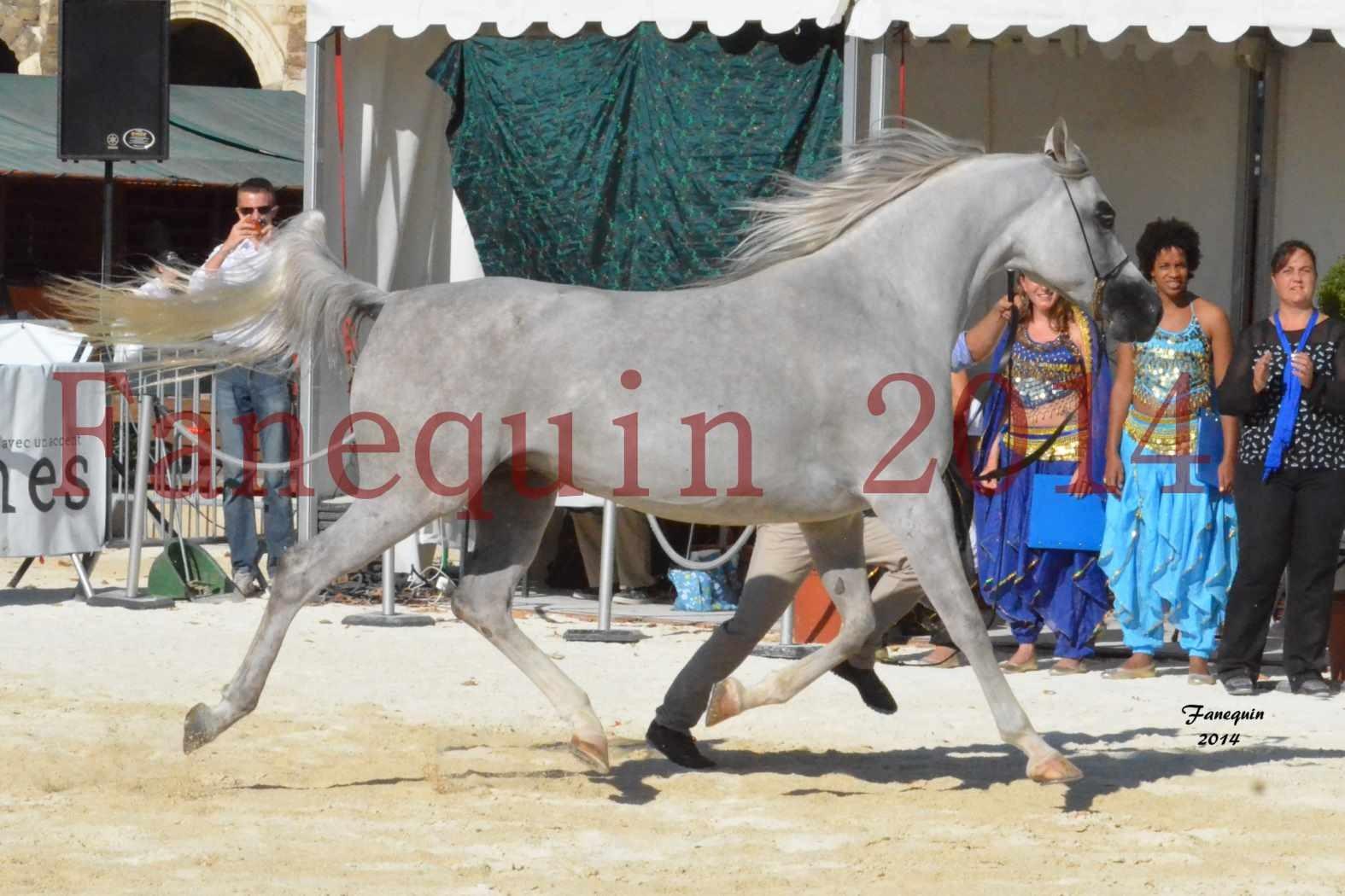 Concours National de Nîmes de chevaux ARABES 2014 - Notre Sélection - ELLESTERA - 12