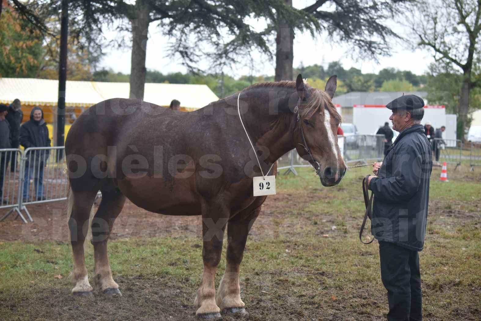 Concours Régional de chevaux de traits en 2017 - Jument Suitée - Trait BRETON - URIELLE DE LA MARGUE - 33