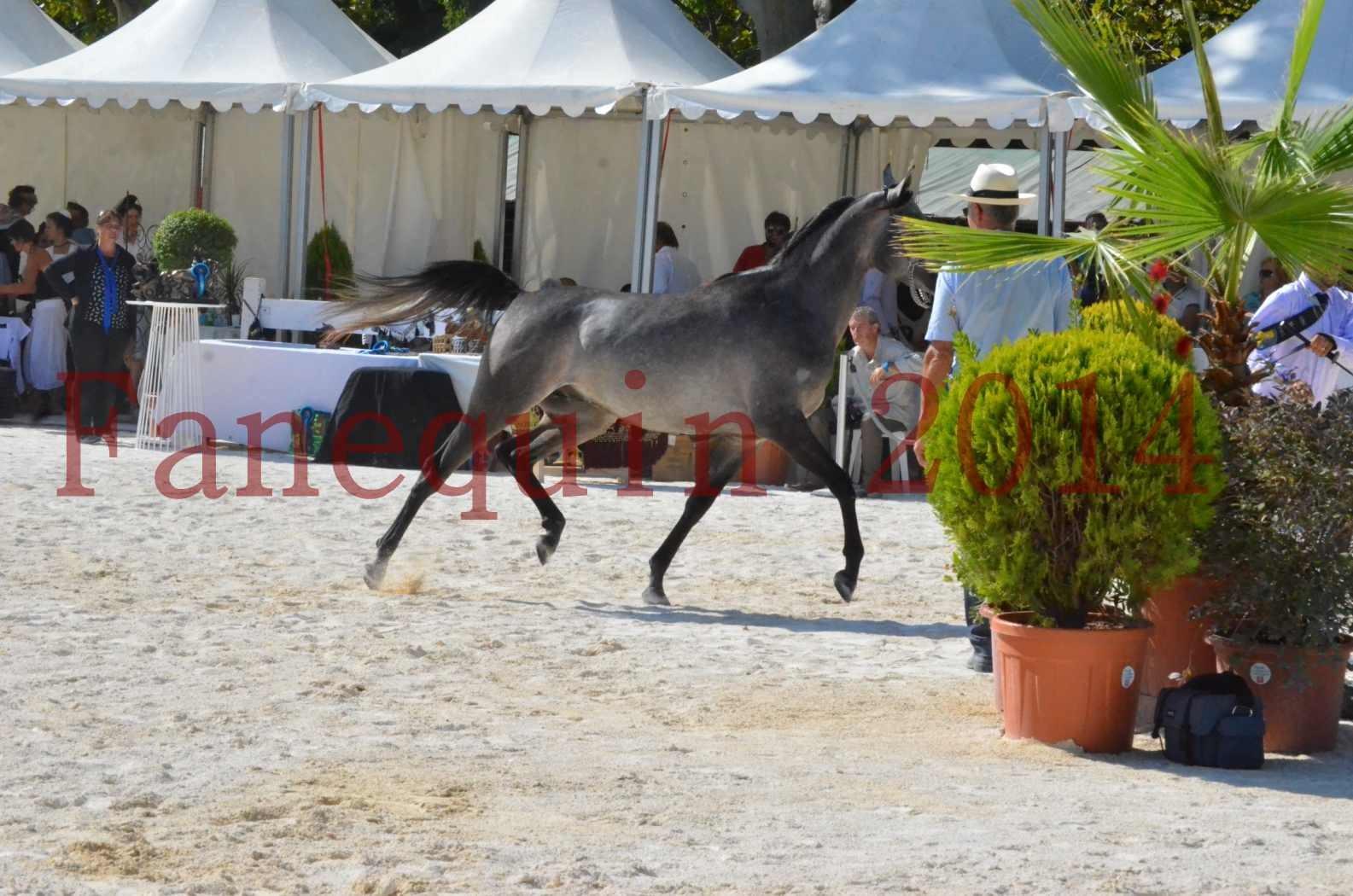 Concours National de Nîmes de chevaux ARABES 2014 - Championnat - JOSEPH'S BOUZIOLS - C 05