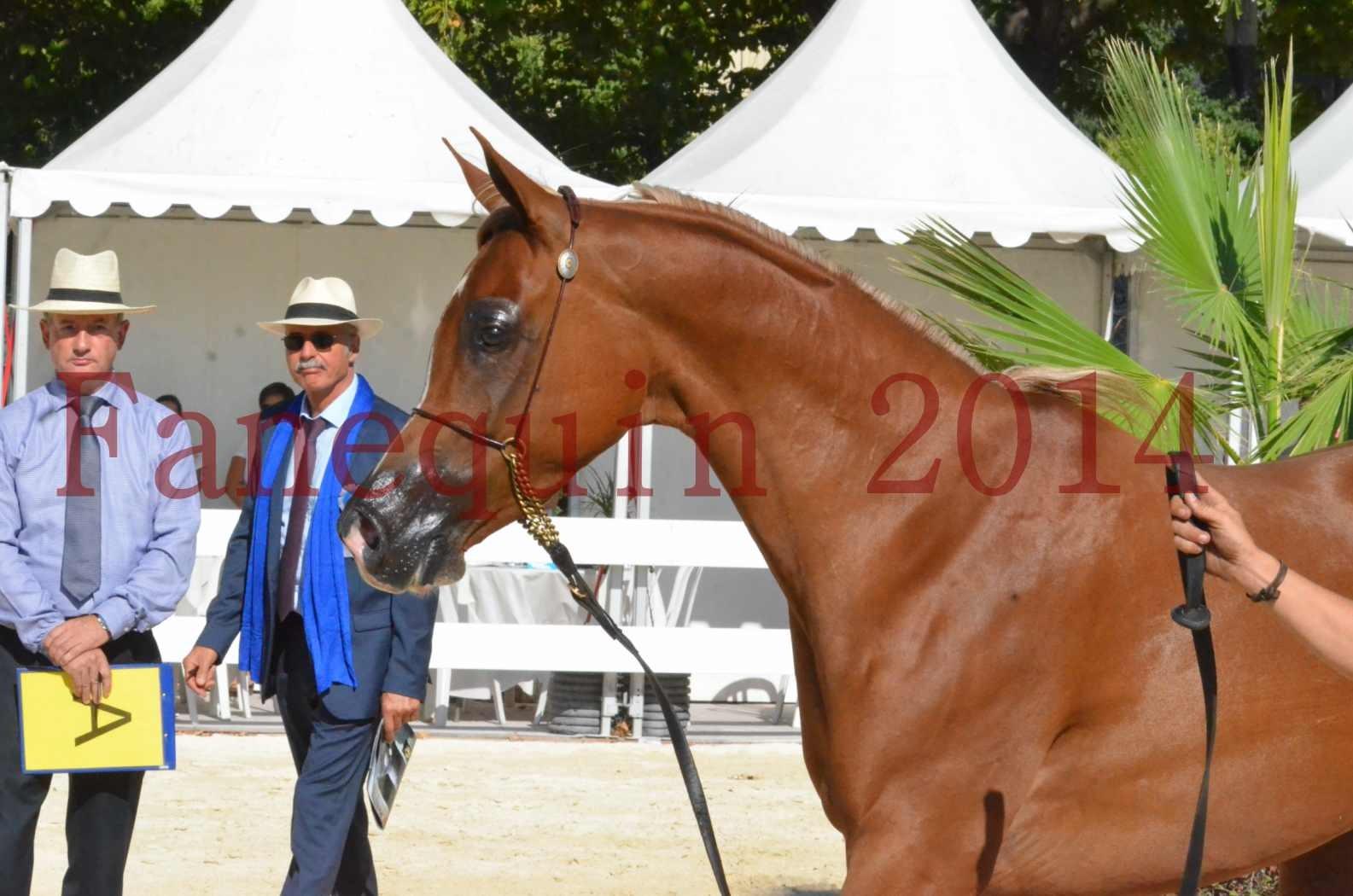 Concours National de Nîmes de chevaux ARABES 2014 - Championnat - MASSAI DE BARREL - 63