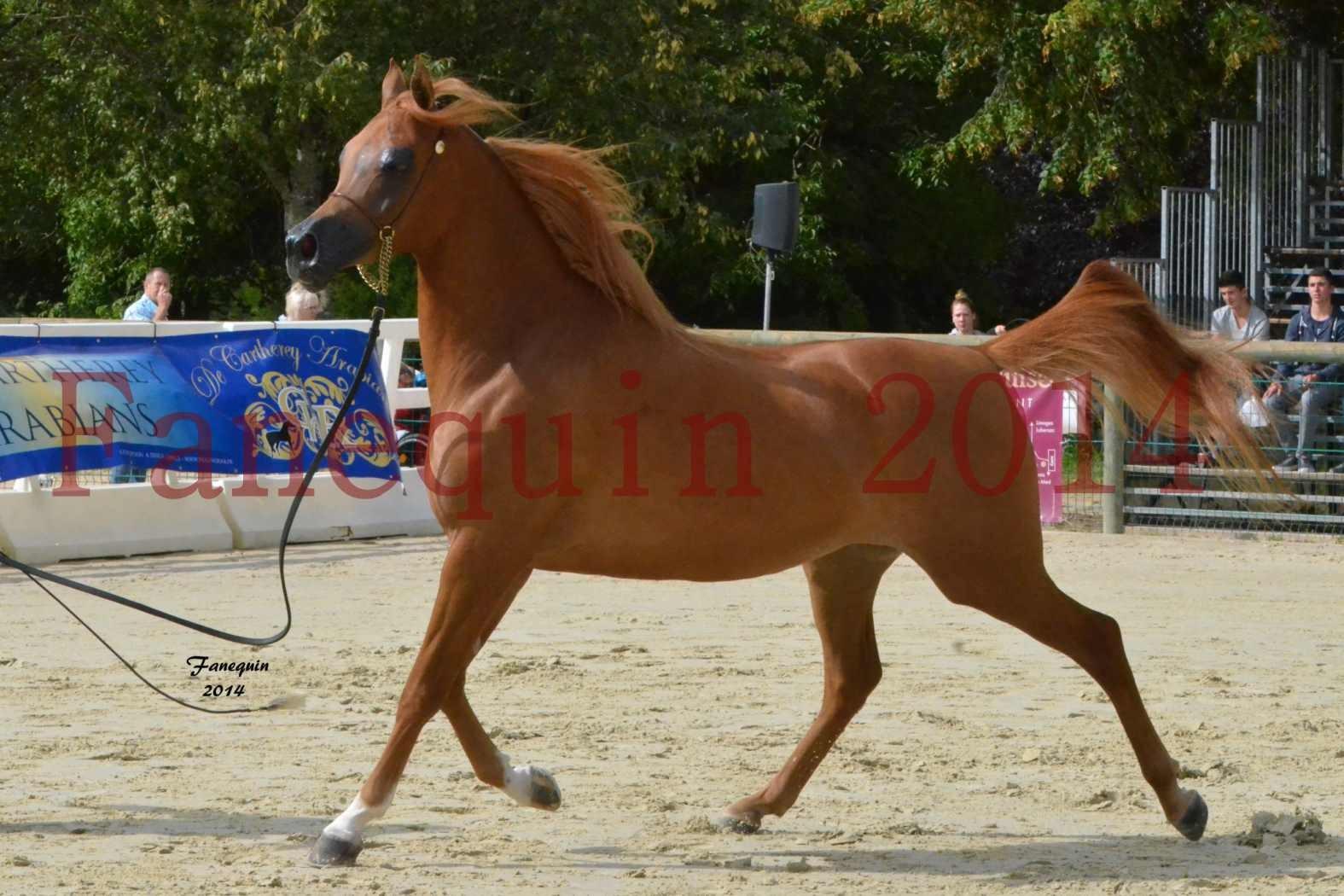 CHAMPIONNAT DE FRANCE 2014 A POMPADOUR - Notre Sélection - LUTFINAH JA - 17