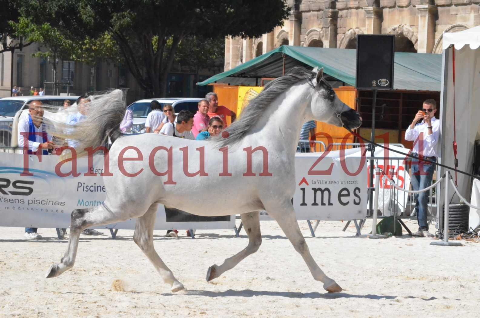 Concours National de Nîmes de chevaux ARABES 2014 - Sélection - SHAOLIN DE NEDJAIA - 21