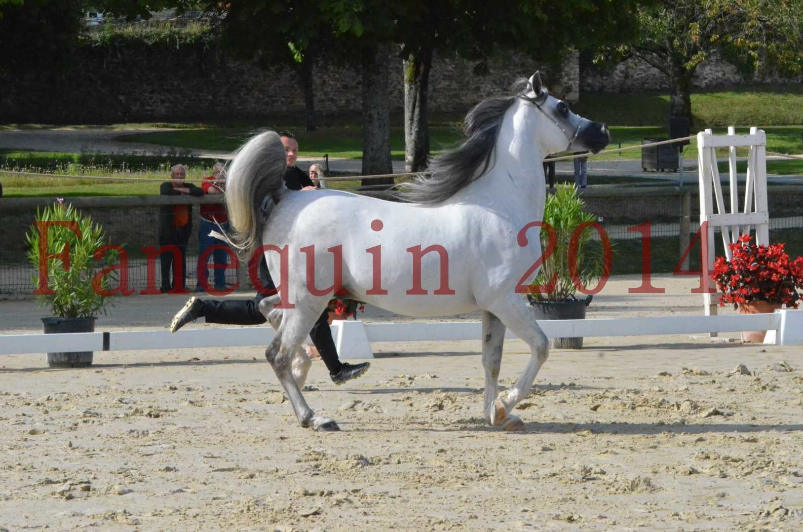 CHAMPIONNAT DE FRANCE  2014 A POMPADOUR - Sélection - SHAOLIN DE NEDJAIA - 02