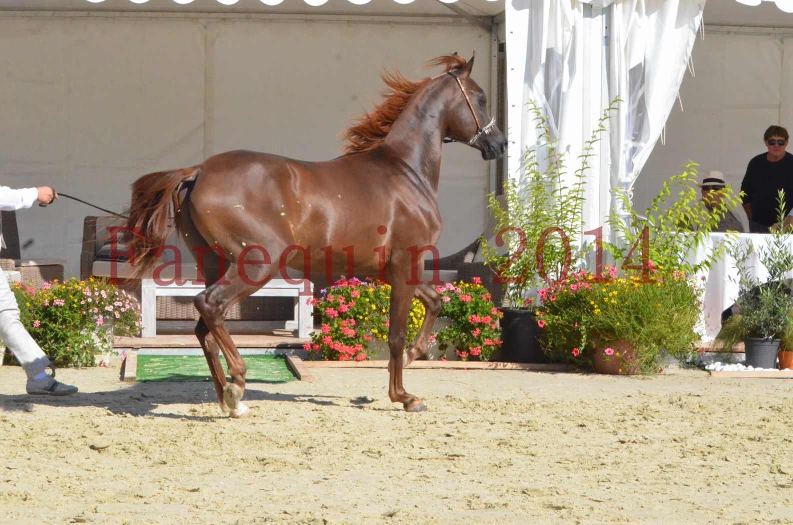 Championnat de FRANCE 2014 - Amateurs - LAMAL - 65