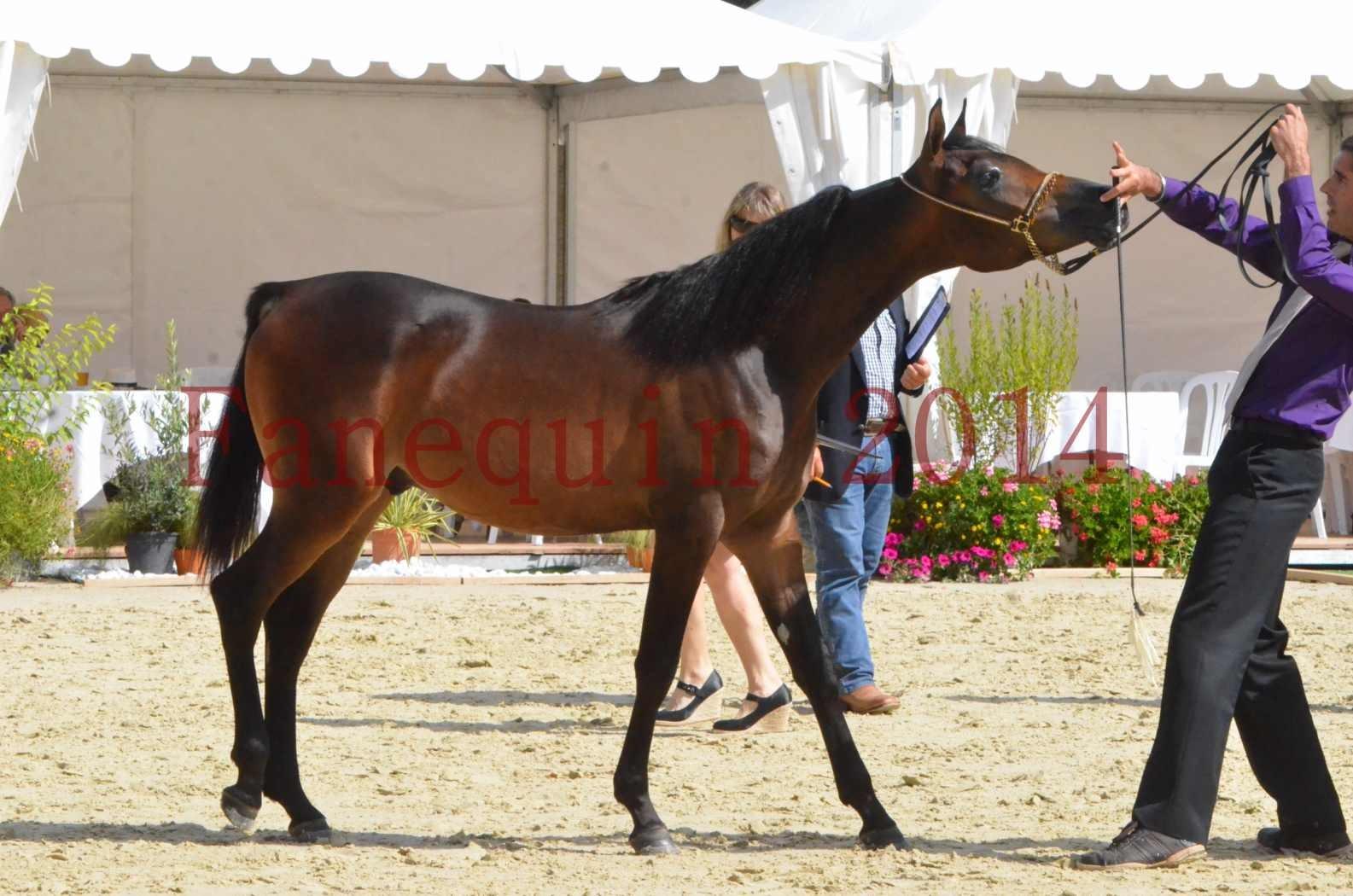 Championnat de FRANCE 2014 - Amateurs - SH FARAJAA - 40
