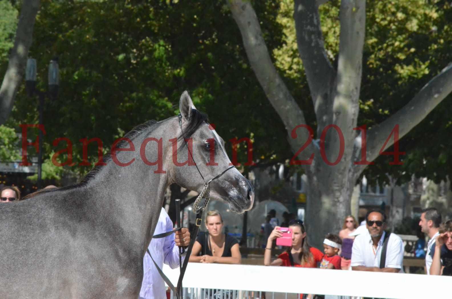 Concours National de Nîmes de chevaux ARABES 2014 - Championnat - JOSEPH'S BOUZIOLS - C 14