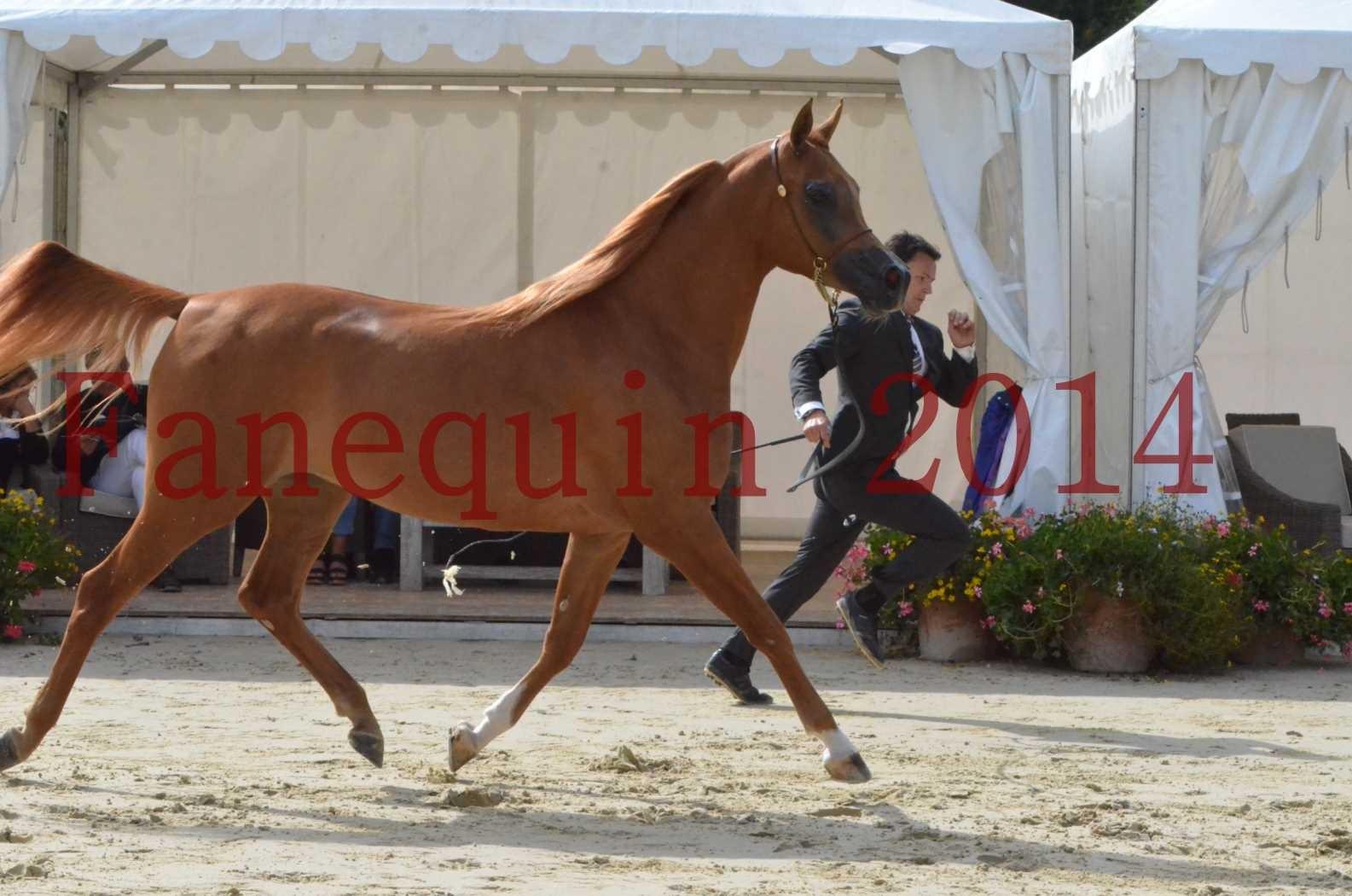 CHAMPIONNAT DE FRANCE 2014 A POMPADOUR - Sélection - LUTFINAH JA - 32