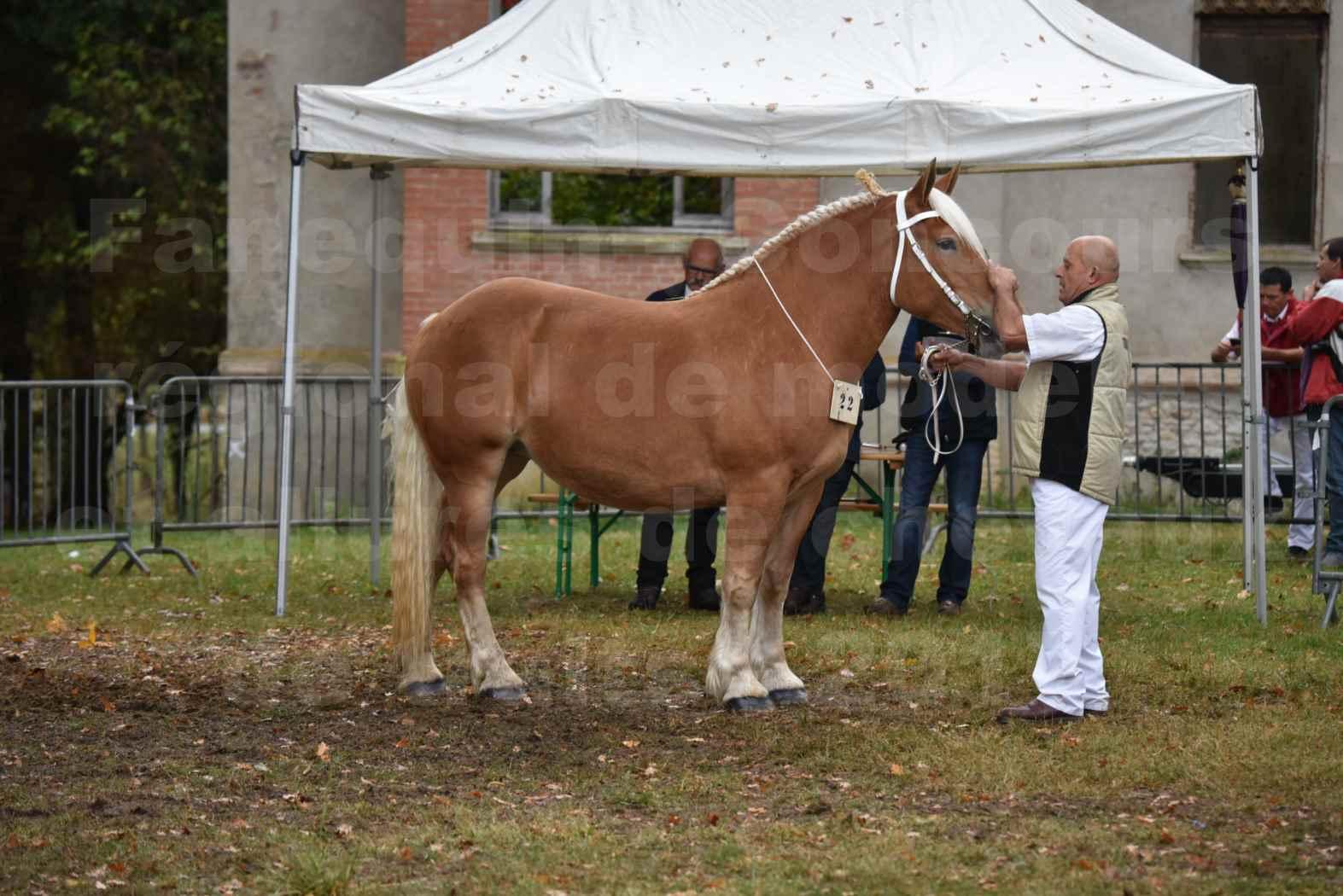 Concours Régional de chevaux de traits en 2017 - Trait COMTOIS - ELLA DE BELLER - 3